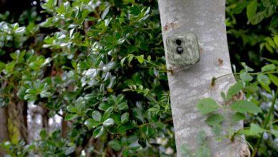 Photo of Cheap Hidden Home Security Cameras