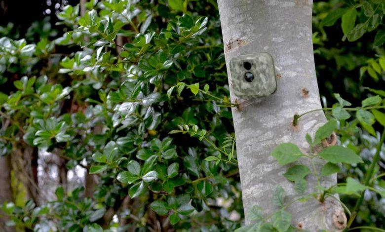 Cheap Hidden Home Security Cameras